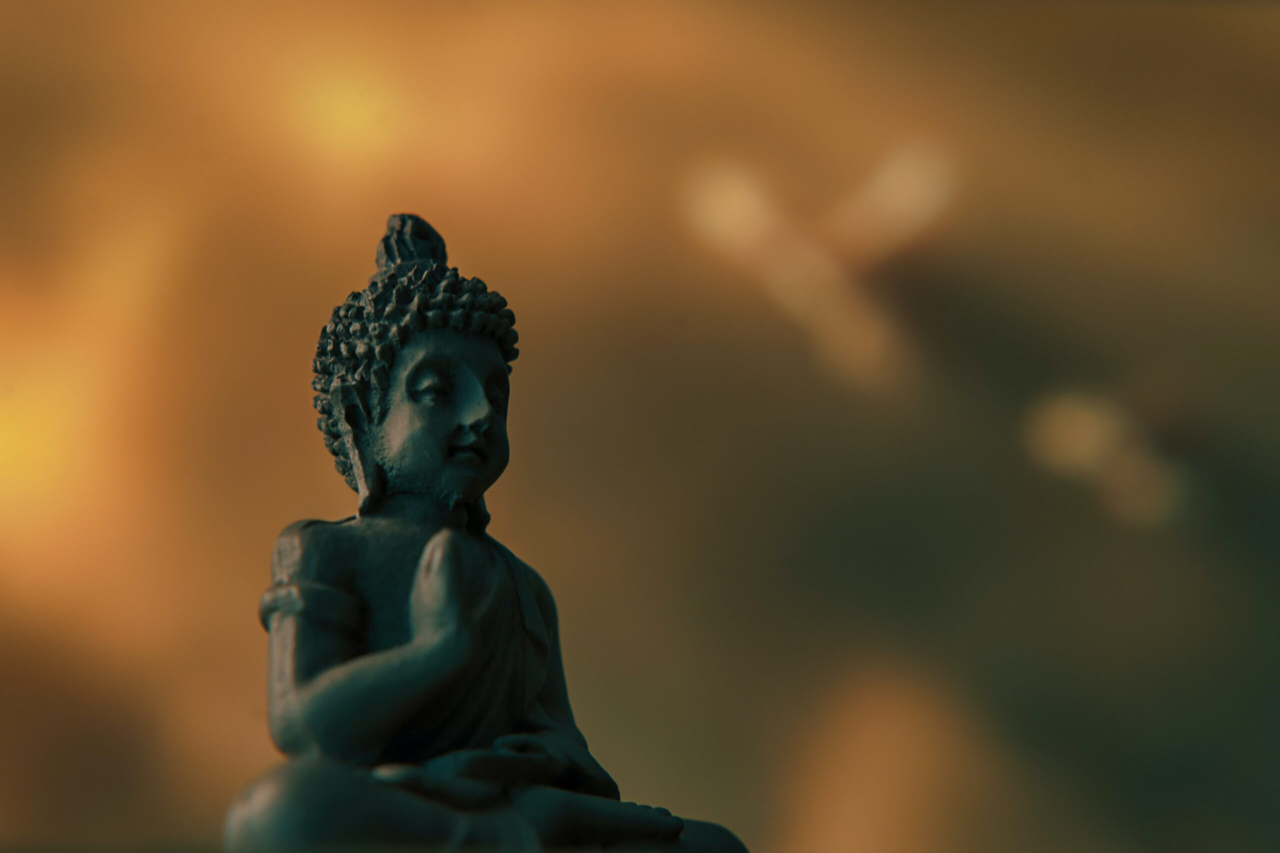 If Meditation is the Answer, then What is the Question?